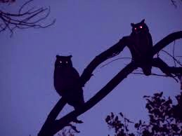 owls_in_the_dark